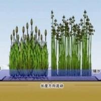 人工湿地规划与建设